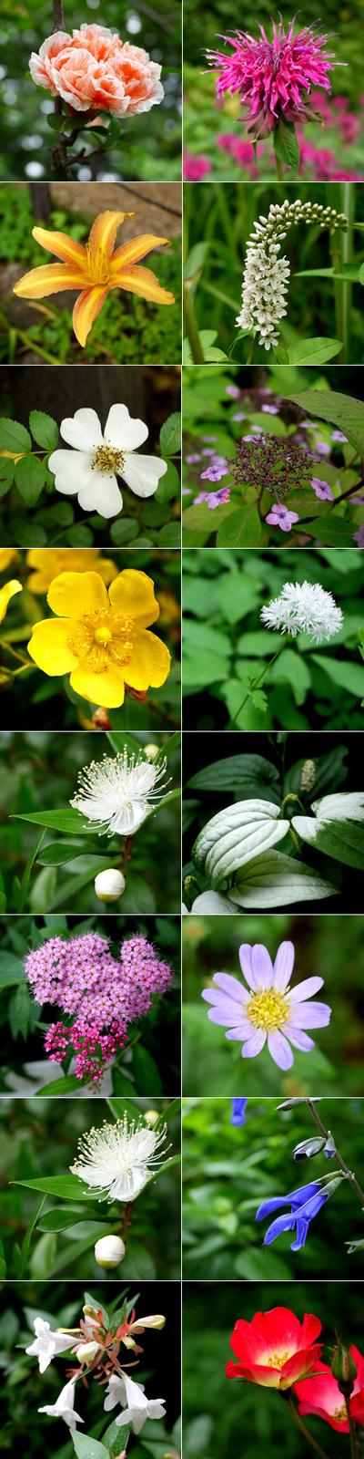 Flowers201106