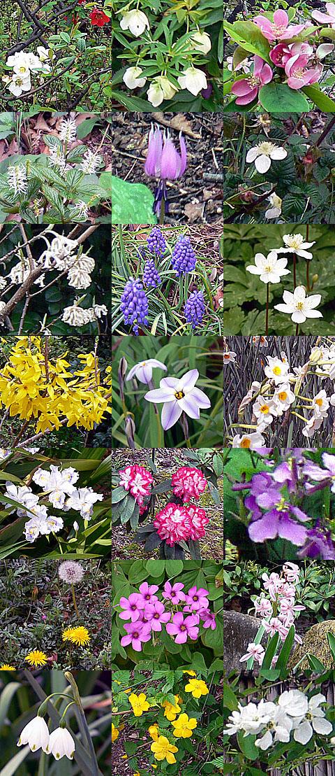 _flowers